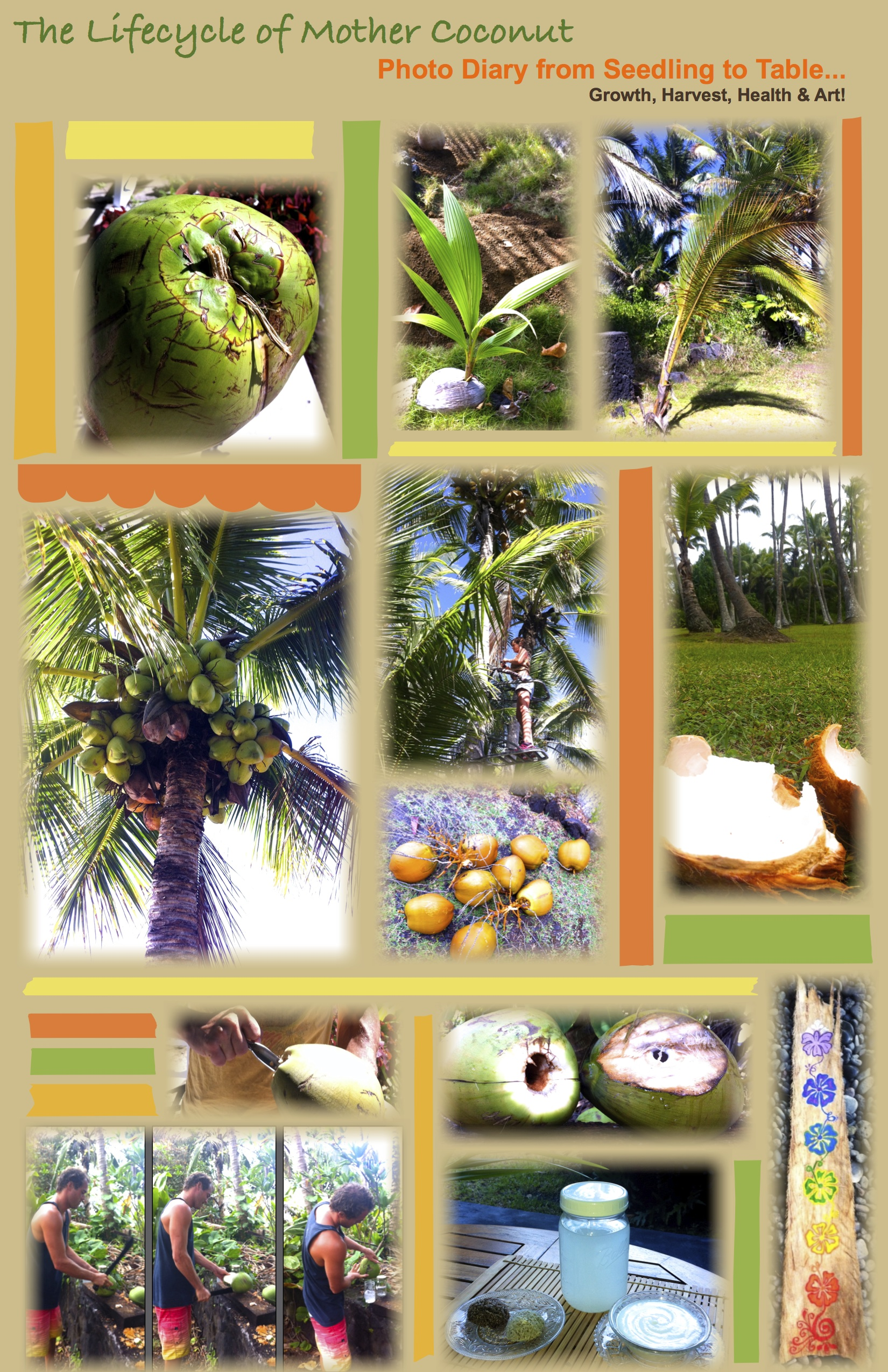 Coconut Lifecycle
