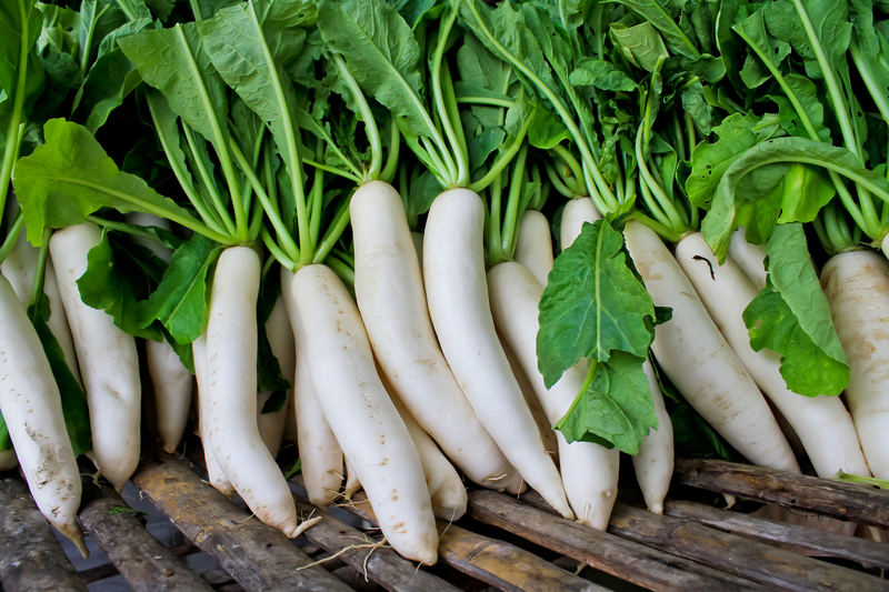 Мы задавались вопросом  а что это за овощ и как его едят?, то сейчас дайкон очень