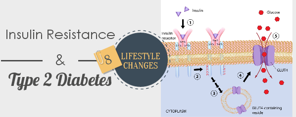 insulin and diabetes Insulin resistance and prediabetes occur when your body doesn't use insulin well what is insulin insulin is a hormone made by the pancreas that helps glucose in your blood enter cells in your muscle, fat, and liver, where it's used for energy glucose comes from the food you eat.