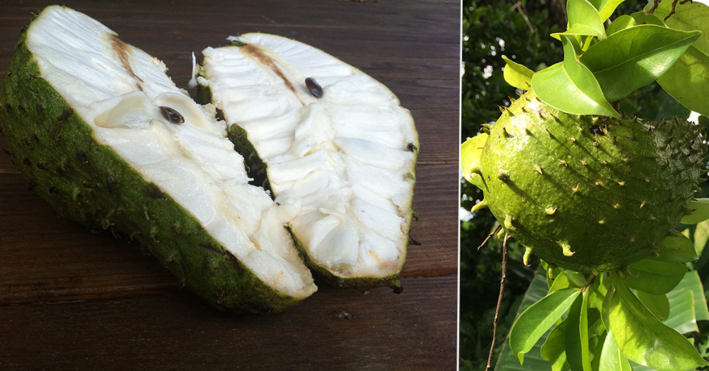 Little Known Ways to Fall In Love With Soursop