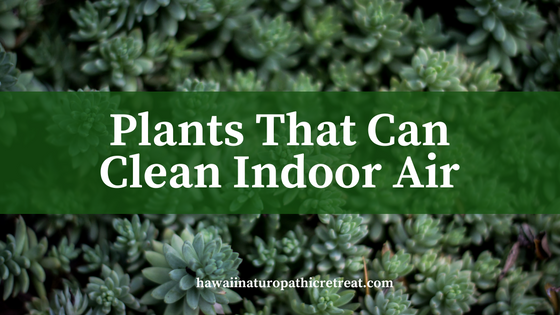 plants that can clean indoor air